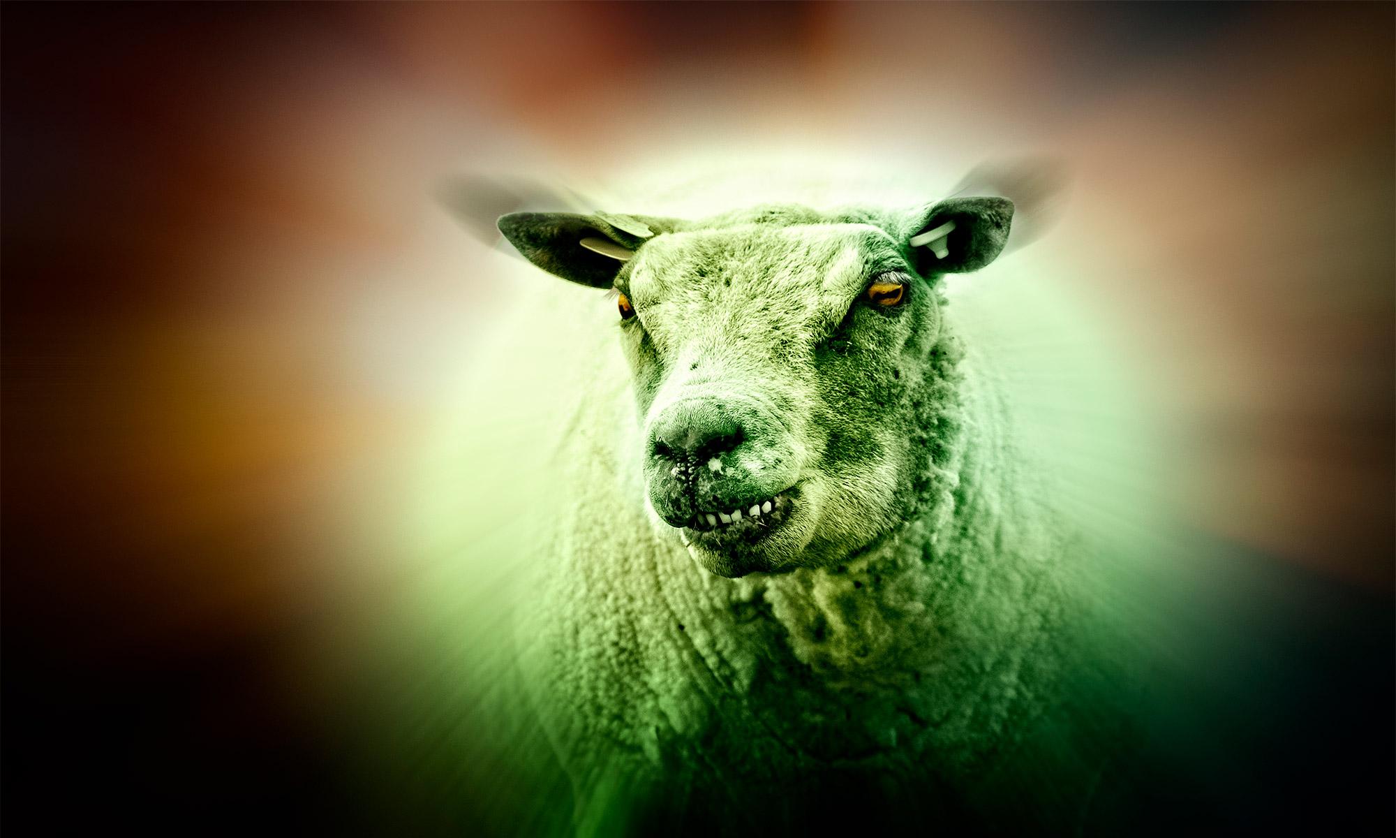 The Green Sheep